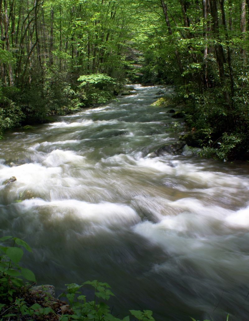 Smoky Mountain National Park 229