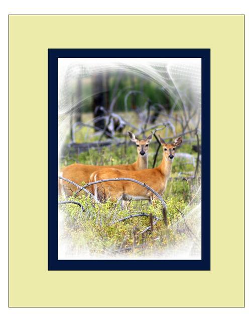 Deer2_matted