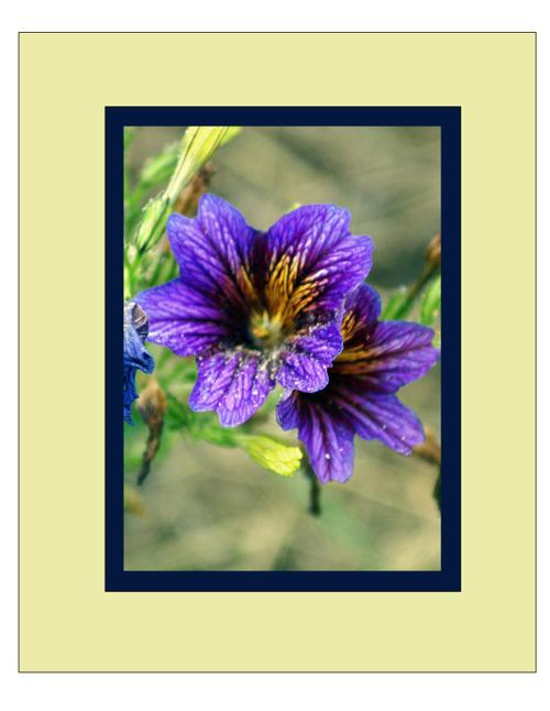 Flowers17_matted