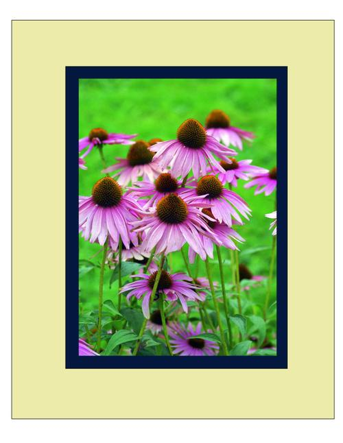 Flowers57_matted_2